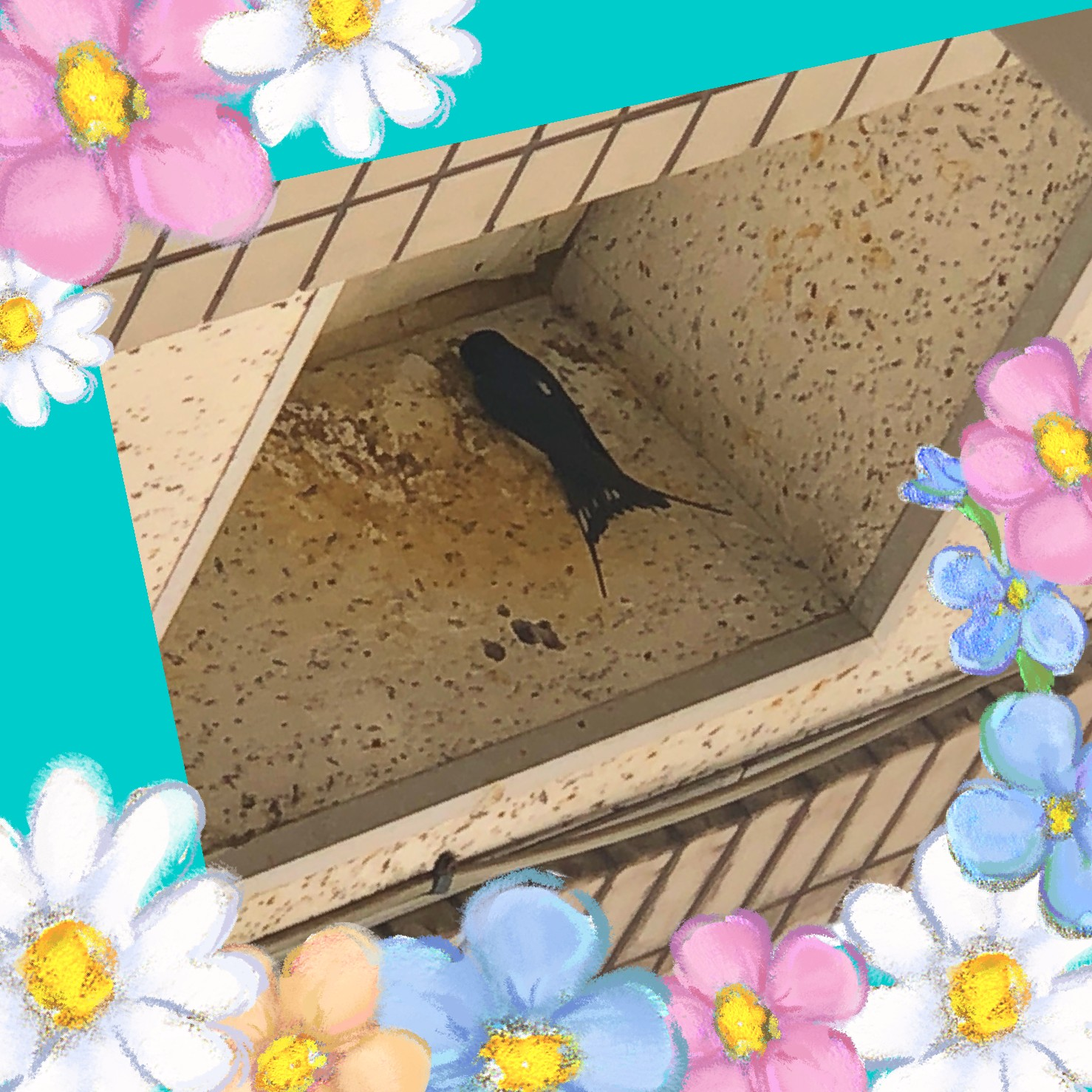 ツバメ 飛来🐤~千葉県・障害者・就職・求人~
